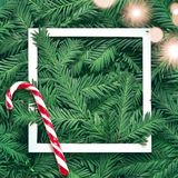 Creative background of pine branch with white paper frame. New Year and Merry Christmas Concept. Flat Lay Royalty Free Stock Images