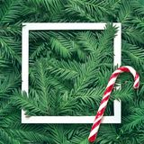 Creative background of pine branch with white paper frame. New Year and Merry Christmas Concept. Flat Lay Royalty Free Stock Photography