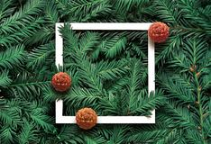 Creative background of pine branch with white paper frame. New Year and Merry Christmas Concept. Flat Lay stock images