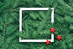Creative background of pine branch with white paper frame. New Year and Merry Christmas Concept. Creative background of pine branch with white paper frame and Stock Image