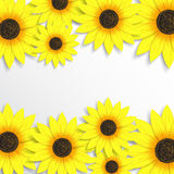 Creative background with sunflowers. Beautiful flowers background for your business vector illustration
