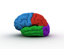 Creative brain. Brain with sections of different colors Royalty Free Stock Image