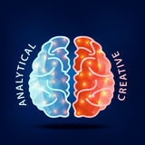 Creative brain Idea.Left and right hemisphere of human brain Stock Photography
