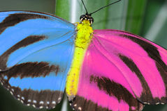 Creative Butterfly. Royalty Free Stock Photography