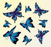 Creative collage with colorful butterflies. Collage with blue butterflies flying Royalty Free Stock Photos