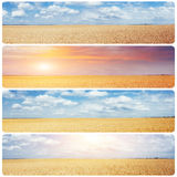 Creative collage wheat field and sun. Instagram tonic effect.  royalty free stock photos