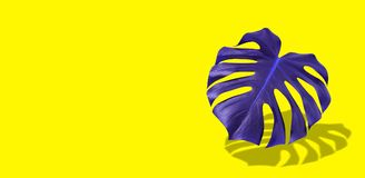 Creative colorful purple tropical leaf monstera in vibrant bold color on yellow background. Concept art. Minimal surreal. stock photos