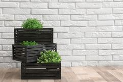 Creative composition of decorative wooden crates with houseplants near brick wall, space for text. Interior decor stock images