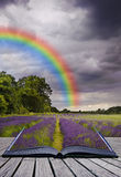Creative concecpt image of lavender fields Royalty Free Stock Image
