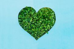 Creative concept with blue background with heart shape outline in green fresh sprouts. Earth day, love nature concept. Space for t. Ext stock photo