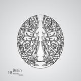 Creative concept of the human brain. Vector elegant illustration Vector Illustration