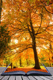 Creative concept idea of Autumn Fall forest Royalty Free Stock Image