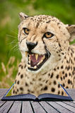 Creative concept image of cheetah in pages of book Stock Images