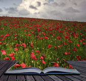 Creative concept image of poppy field Royalty Free Stock Images
