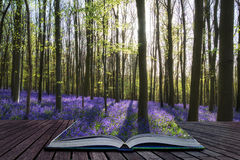Creative concept image Stunning bluebell flowers in Spring fores Royalty Free Stock Photography