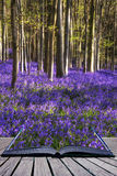 Creative concept image Stunning bluebell flowers in Spring fores Stock Photo