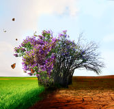 Creative concept landscape. Live and dead tree Stock Photography