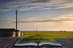 Creative concept pages of book Farm in rapeseed crop field at su Stock Photography