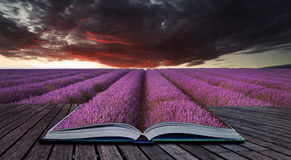 Creative concept pages of book Stunning lavender field landscape Stock Image