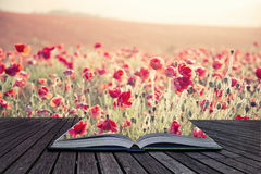 Creative concept pages of book Stunning poppy field landscape un Royalty Free Stock Images