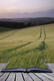 Creative concept pages of book Summer landscape image of wheat f Stock Photos
