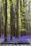 Creative concept pages of book Vibrant bluebell carpet Spring fo Royalty Free Stock Images