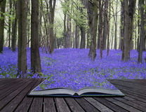 Creative concept pages of book Vibrant bluebell carpet Spring fo Royalty Free Stock Photo