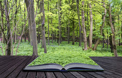 Creative concept pages of book Vibrant lush green Spring forest Stock Photography