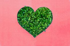 Creative concept with pink background with heart shape outline in green fresh sprouts. Earth day, love nature concept. Space for t. Ext stock images