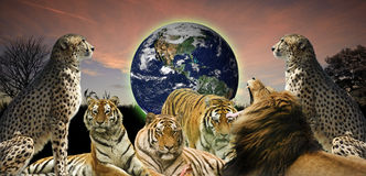 Creative concept of wildlife protecting planet Stock Image