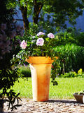 Creative container design. Container gardening ideas with ivy and hydrangea in terracota pot Stock Photos