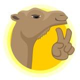 Happy camel Stock Photo