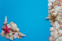 Creative flat lay concept of summer travel vacations. Top view of seashells and starfish on turquoise blue background stock photos