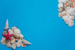 Creative flat lay concept of summer travel vacations. Top view of seashells and starfish on turquoise blue background stock image