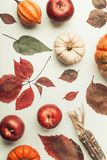 Creative Flat lay of various colorful little pumpkin, apples and fall leaves on white table background, top view. Autumn composin Royalty Free Stock Photo