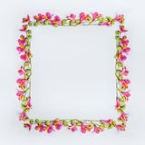 Creative floral design frame layout with pink and green exotic flowers on white background. Top view Stock Photos