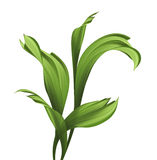 Creative foliage, illustration of green grass and leaves isolate Stock Image