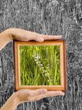 Creative frame Stock Photos