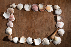 Creative frame made of shells Royalty Free Stock Image