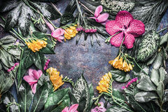 Creative frame made of various tropical flowers and leaves on dark rustic background. Top view Royalty Free Stock Photo