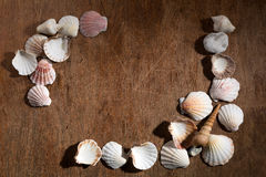 Creative half frame made of shells Stock Photo