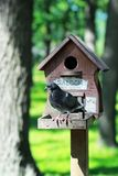 Creative hand made wooden bird house/bird feeder with two dove on a pole in a park Stock Photos
