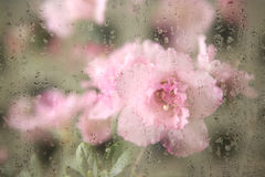 Creative hazy flowers. Through secondary exposure of flowers, the flowers are placed behind the droplets formed a kind of creative hazy beauty Royalty Free Stock Images