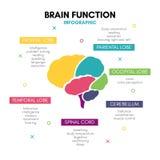 Creative human brain infographic concept lobe mind royalty free illustration