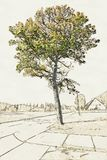 Creative Illustration of an Old Tree in front of wide field stock illustration