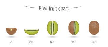 Creative kiwi fruit chart Stock Photos