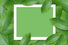 Creative lay out made of green leaf with white frame ,flat lay,c. Opy space stock images