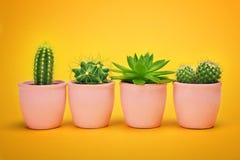 Creative layout Cactus set in ceramic pot Fashion Design. Cacti Minimal summer still life concept. Trendy Bright Color. stock images