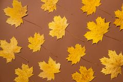 Creative layout of colorful autumn leaves. Flat lay. Royalty Free Stock Photography