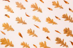 Creative layout of colorful autumn leaves. Flat lay. Stock Image